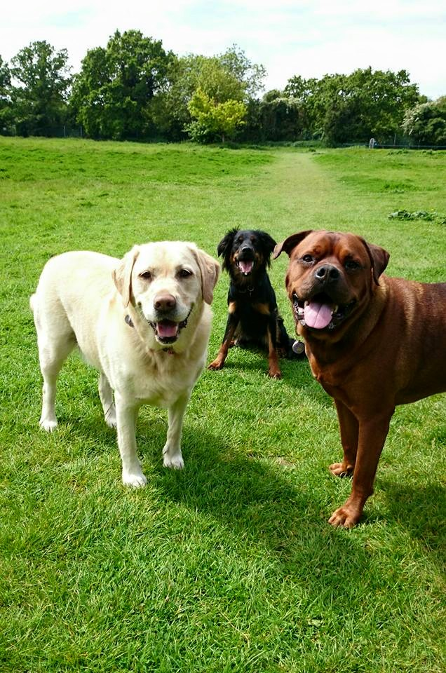 Dog walking and Pet Care in Maidstone and Kent