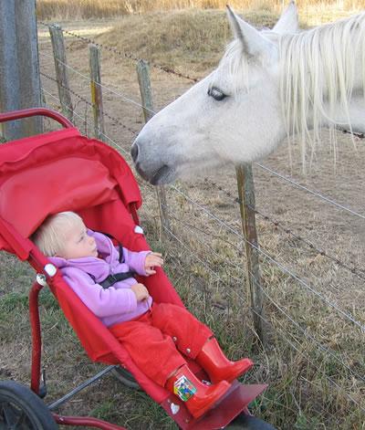 farmhorse.jpg