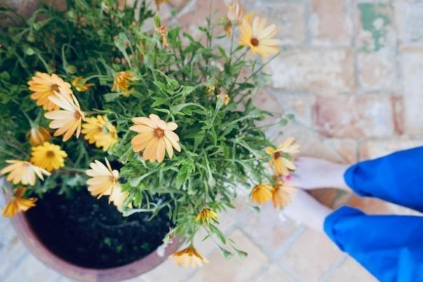 Casa-la-Siesta-Poppy-Loves-27