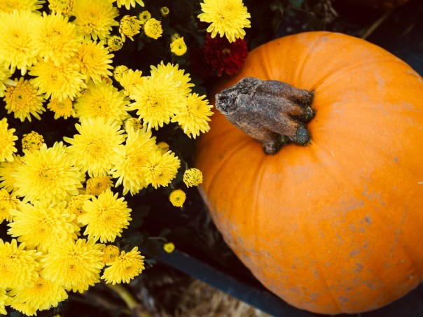 Pumpkin-Picking-Near-London