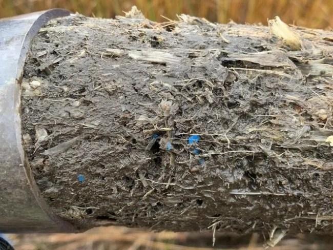 Salt marshes keep score on humanity's plastic problem