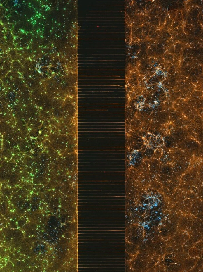 Neurons connected by axons