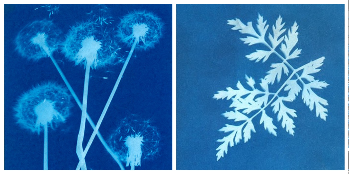 sun prints photography art workshop collage
