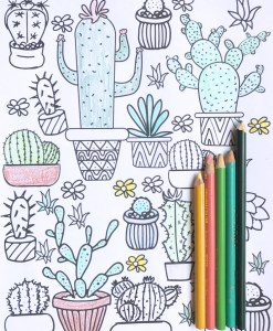 succulent adult coloring pages hero pop shop america