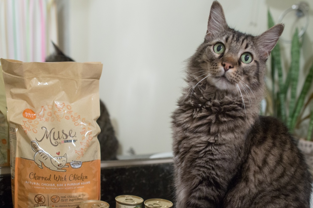 #shop cobra posing with muse by purina cat food pop shop america