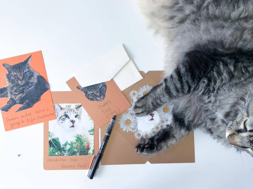 cobra the cat making fall cards diy by pop shop america