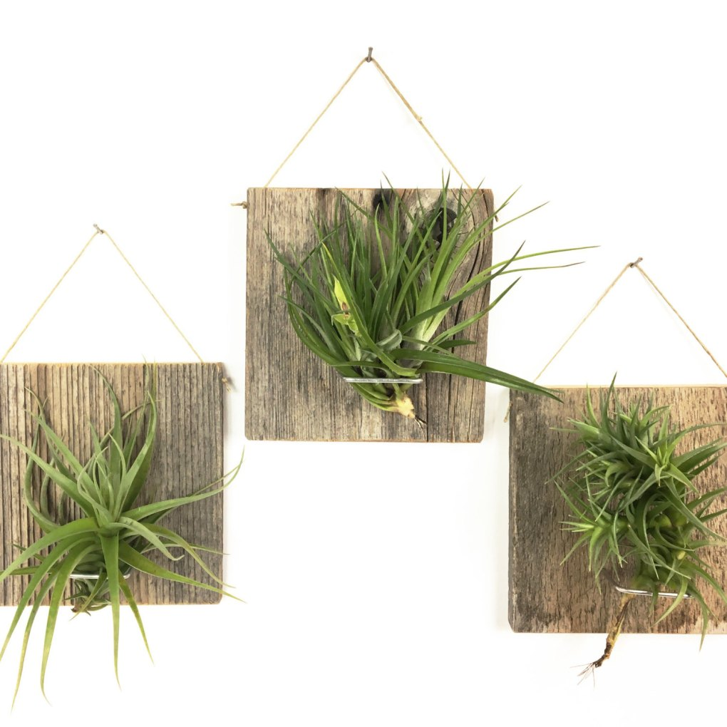 etsy handmade air plant hangers pop shop america