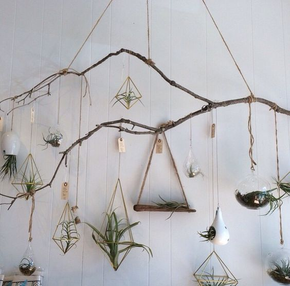 how to display air plants home inspiration pop shop america