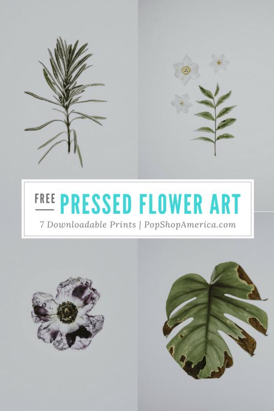 free pressed flower art prints pop shop america