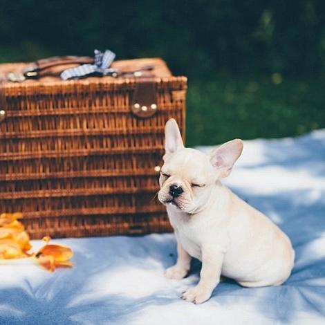 diy-shibori-inspired-picnic-blanket-crafts-how-to hometalk
