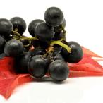 Maqui Berry Benefits