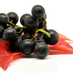 Maqui Berry Benefits