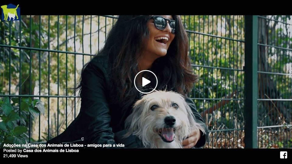 Adoções na Casa dos Animais de Lisboa