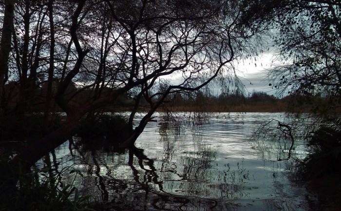 Fotografía del Río Calle Calle en el Jardín botánico de la Universidad Austral de Valdivia.