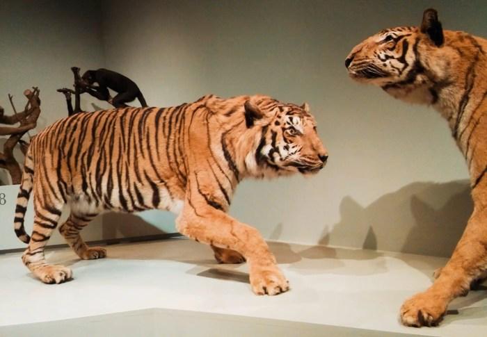 Museo de Zoología de Sao Paulo.