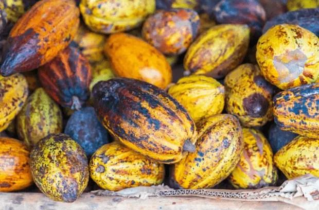 Cacao, uno de los tours gastronómicos de República Dominicana.