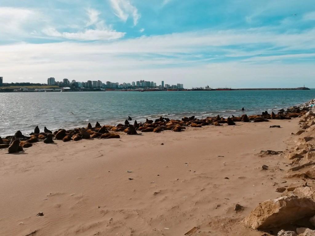Reserva de Lobos Marinos de Mar del Plata.