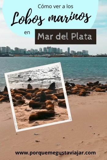 Pin Lobos marinos en Mar del Plata.