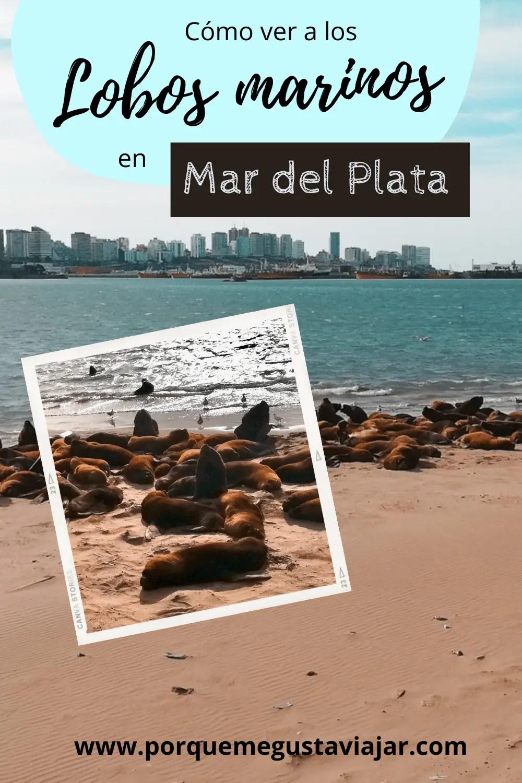 Cómo ver a los lobos marinos en Mar del Plata