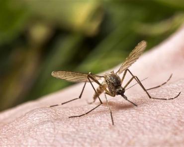 Comment lutter contre les moustiques en été