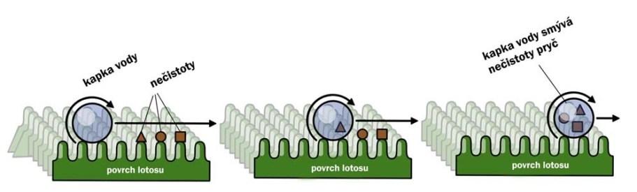 nanotechnologie efekt lotosového květu