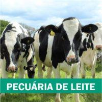 pecuaria-de-leite-portal-dbo