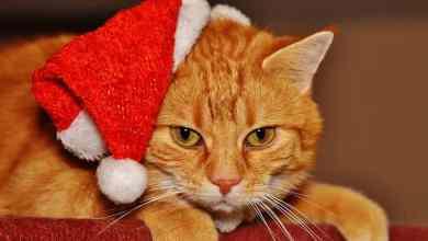 Photo of Deixe os gatos em paz no Natal