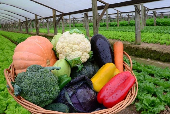 Conab verifica queda nos preços de hortaliças após aumento da oferta e diminuição no consumo