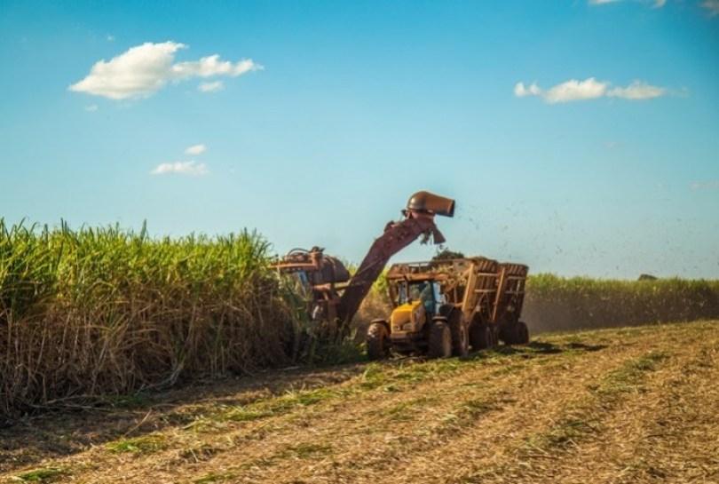 Cana: Apesar da queda na moagem, produção de etanol anidro cresce 8,24%, diz Unica