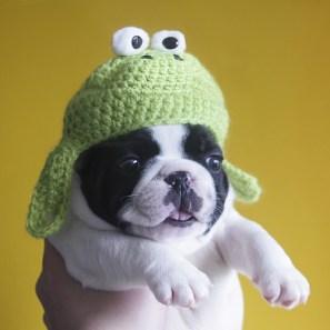 Tumblr com fotos de animais fantasiados de outros animais.