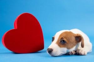 Cães podem diminuir a pressão arterial de seus tutores. Foto: Reprodução
