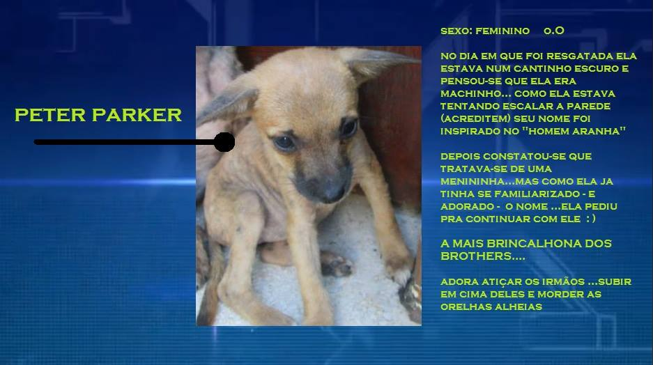 A cachorra Peter Parker, que foi a primeira adotada do reality. (Foto: Reprodução / Facebook)