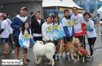 sp-dog-run-05