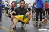 sp-dog-run-19