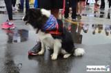sp-dog-run-20a