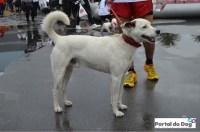 sp-dog-run-59