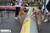 sp-dog-run-76