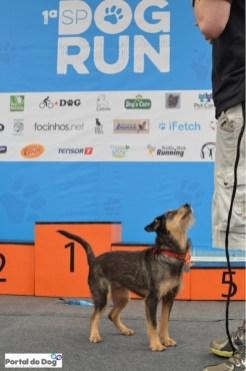 sp-dog-run-96