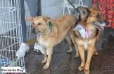 sp-dog-run-feira-adocao-01