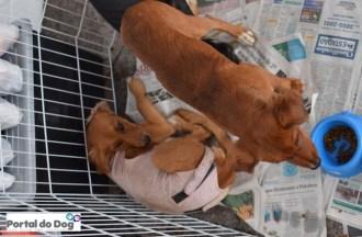sp-dog-run-feira-adocao-02