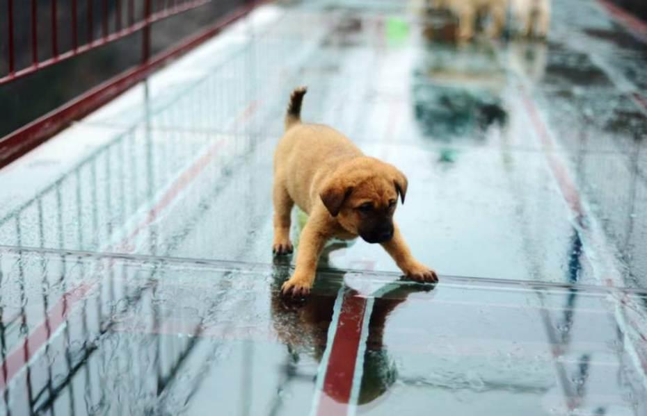 Cachorro com medo em ponte de vidro na China. (Foto: Reprodução / Metro UK)