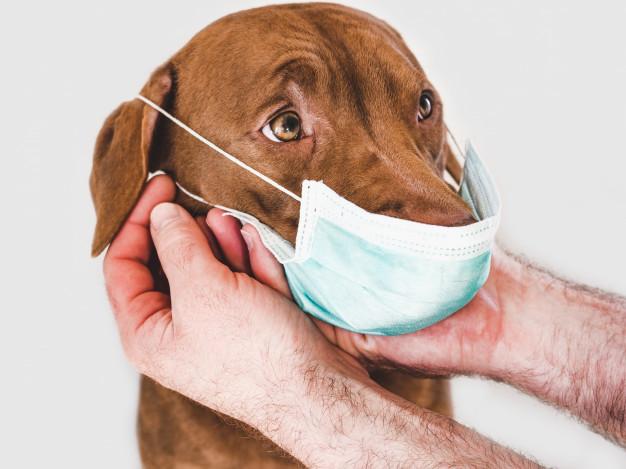 isolamento social de cachorros