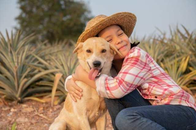 como aumentar a imunidade do cachorro