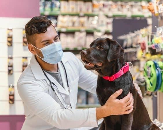 exames de rotina cachorros