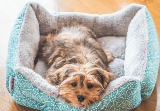 Como combater a depressão canina
