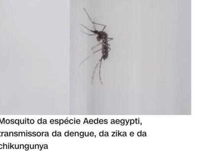 Fiocruz: Falta de levantamento epidemiológico pode aumentar casos de dengue