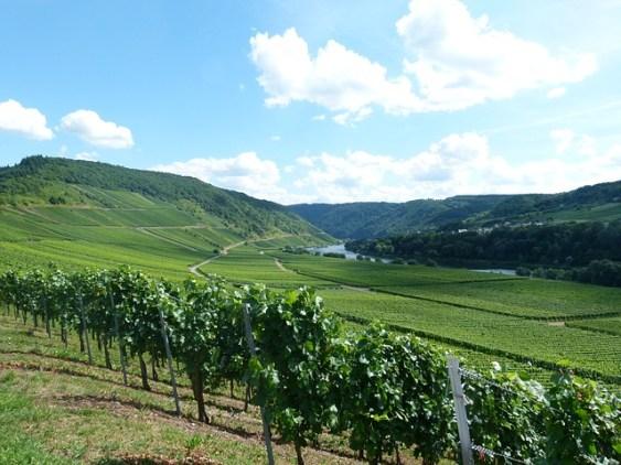 Vini della Germania, valle della Mosella