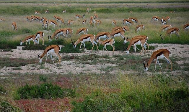 Parco nazionale Etosha namibia