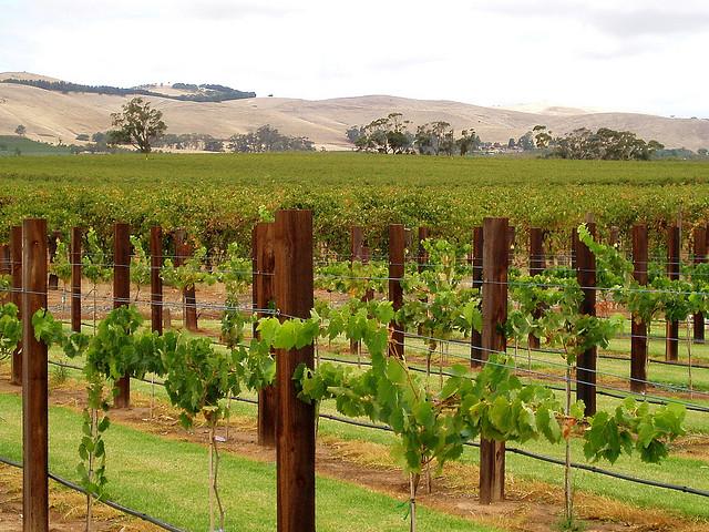 i migliori vini australiani