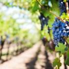 regioni vinicole da visitare
